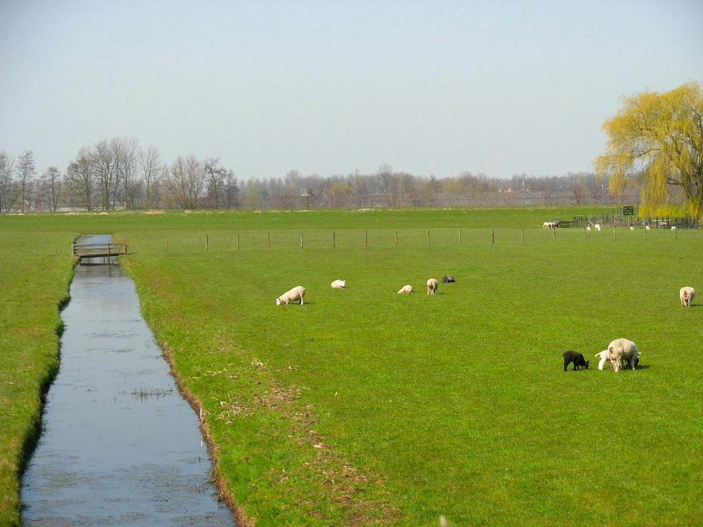 Sea level rise and the future of the netherlands for Farm house netherlands